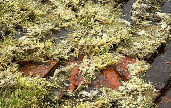 Moss Damaged Roof Tile